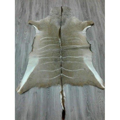 Kudu Area Rug, 64x51 in, Exotic Area Rug, Area Rugs Living Room Zerimar - 2